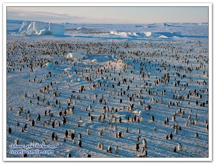 أفضل الصور من ناشيونال جيوغرافيك روسيا في يناير