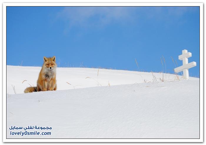 أفضل الصور من ناشيونال جيوغرافيك في يناير 2013