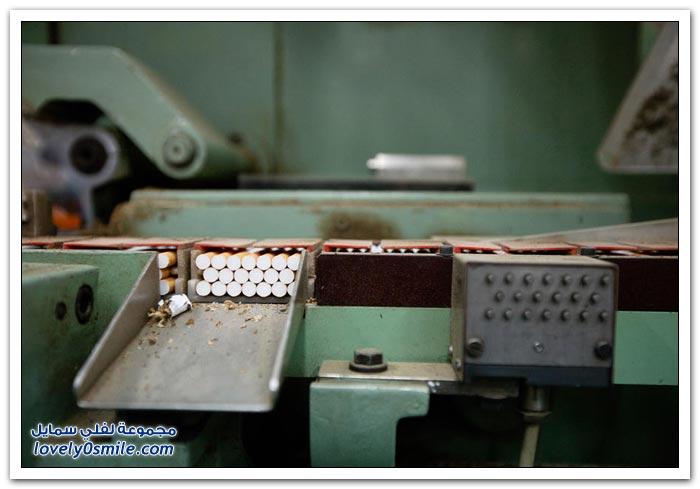 أحد مصانع السيجار في روسيا