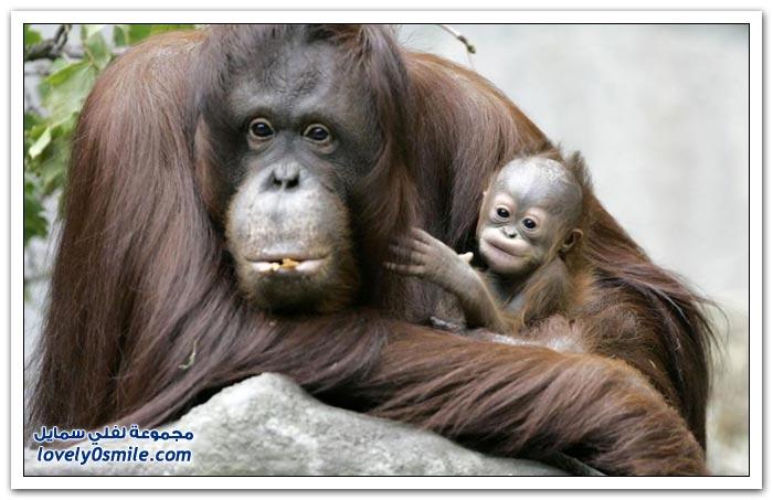الحيوانات وأطفالها