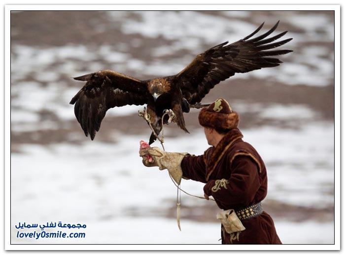 المهرجان السنوي للصقور في كازاخستان