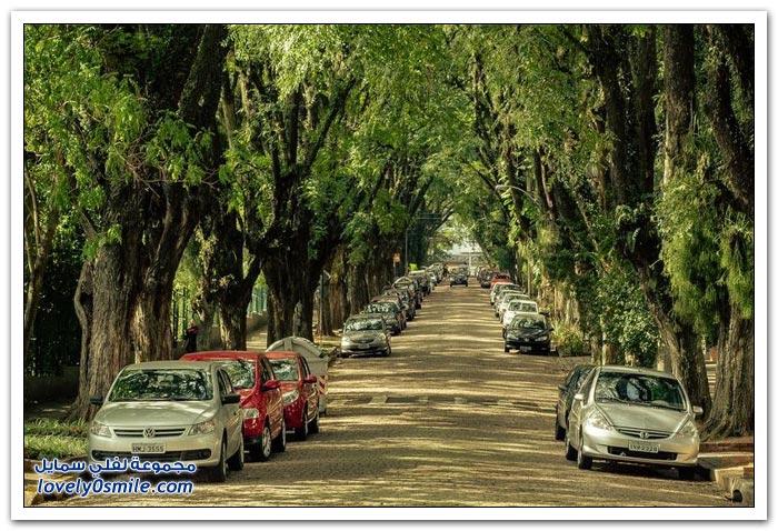 أجمل عشرة أنفاق من الأشجار حول العالم