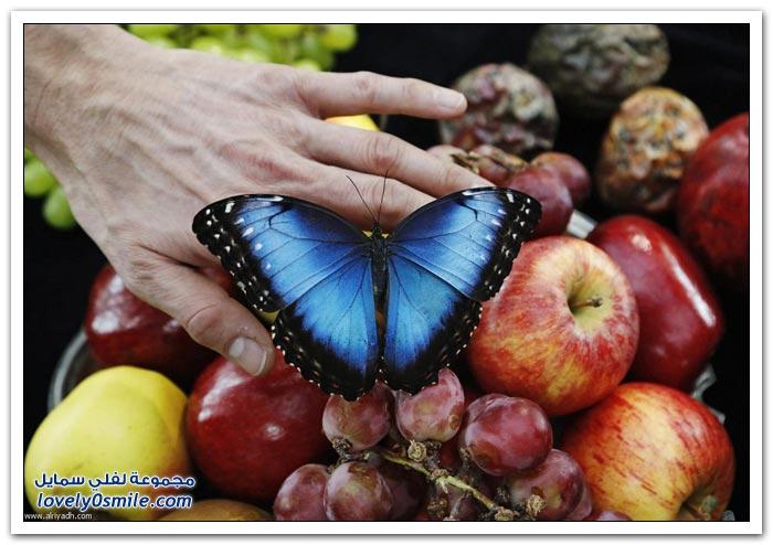 معرض الفراشات في لندن