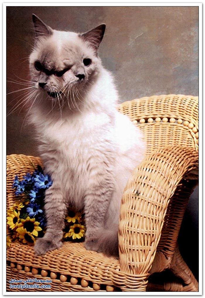 صور: قطة بوجهين