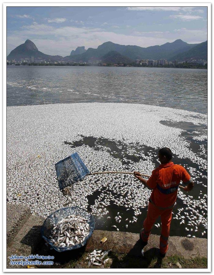 أسماك نافقة في البرازيل