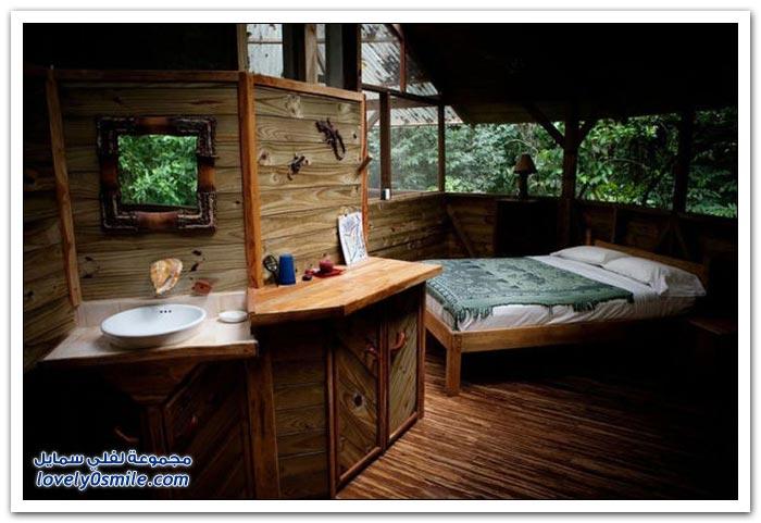 منازل على الأشجار في جبال كوستاريكا