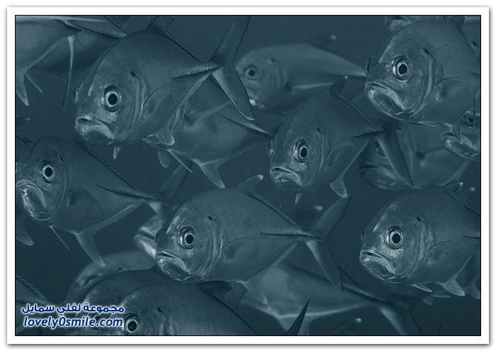 الكائنات الحية في أعماق البحار ج5