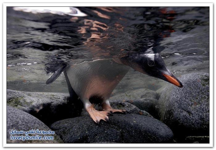 صور لحيوانات القطب الشمالي
