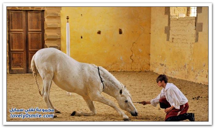 مدرسة الباليه للخيول