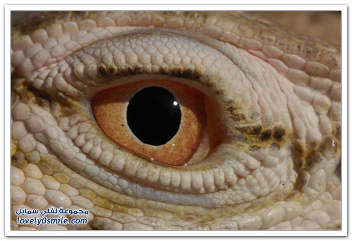 عيون بعض الحيوانات