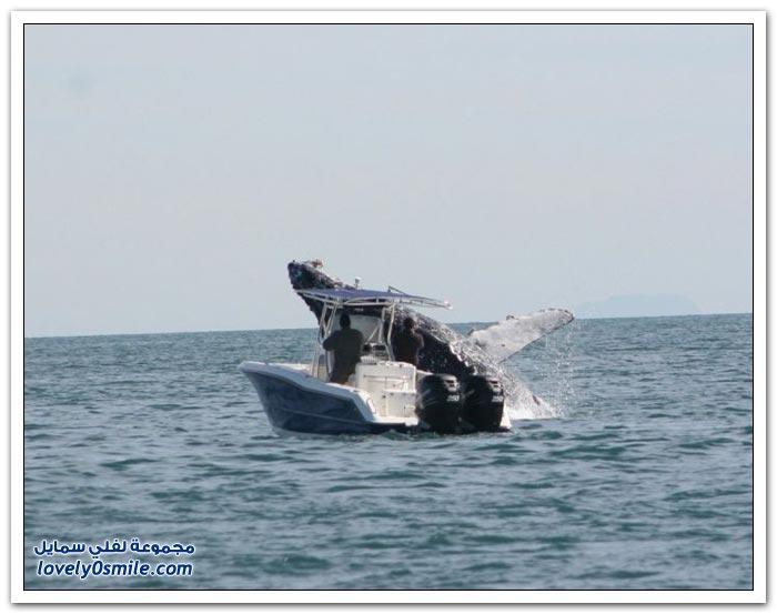 حوت يهاجم قارب في المكسيك