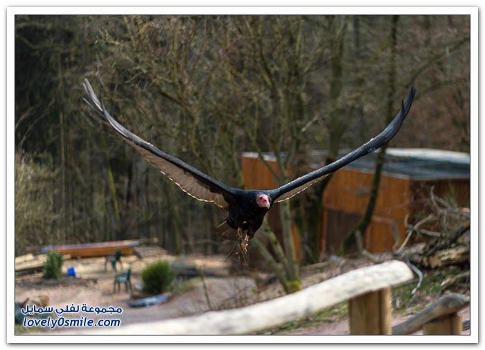 حديقة الطيور الجارحة في ألمانيا