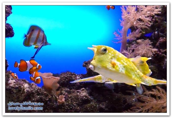 الأسماك الملونة في قاع البحر