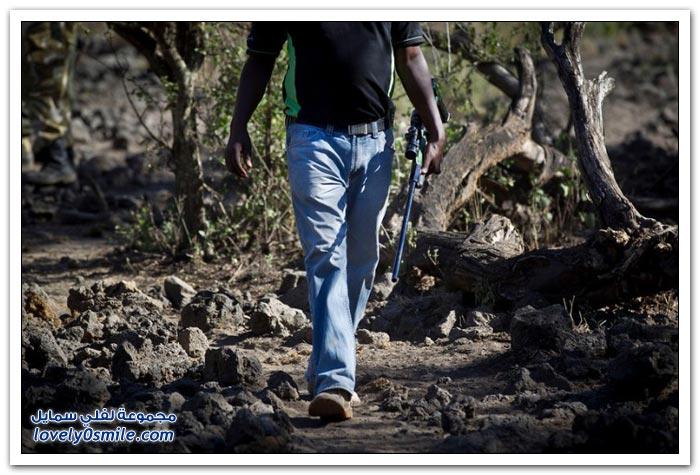 صيد الفيلة غير المشروع في أفريقيا