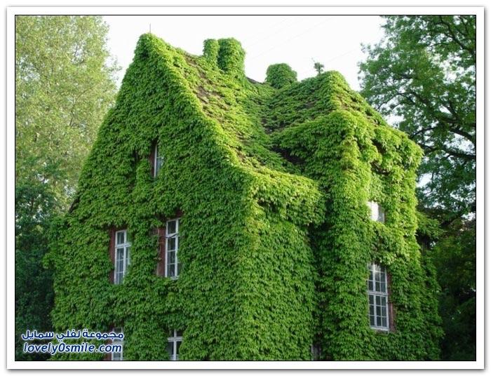 منازل مغطاة بالأشجار