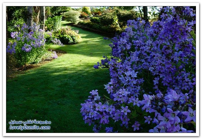 حديقة القيقب في نيوزيلندا