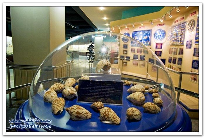 متحف مقذوفات البحر في تايلاند