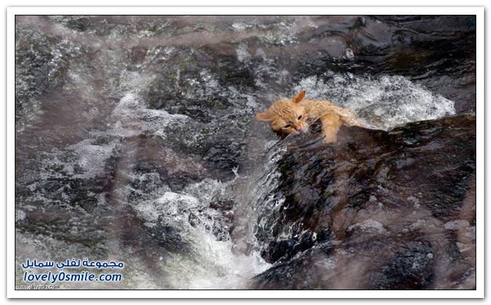 من أجمل صور الحياة البرية