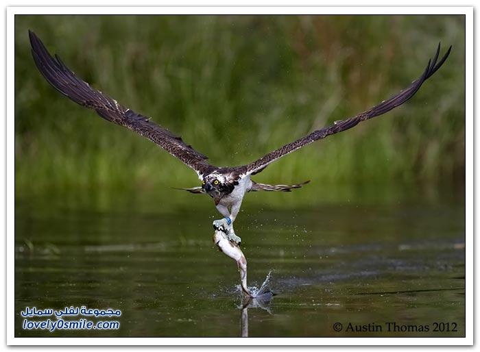 صور لحظات الصيد لبعض الحيوانات