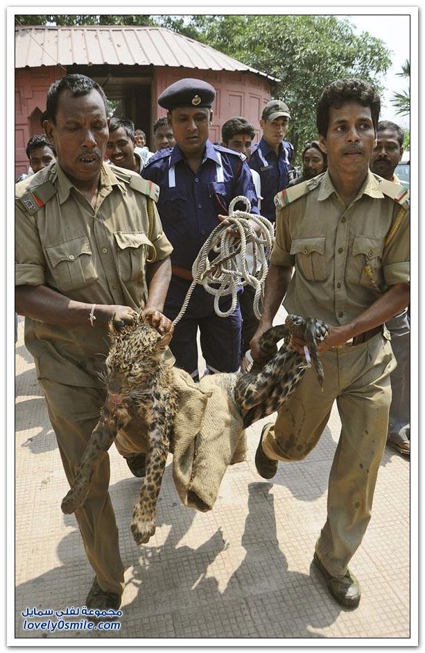إنقاذ فهد سقط في بئر بالهند