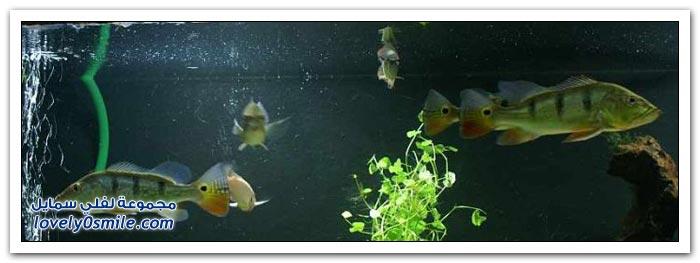 صناعة حوض سمك في المنزل