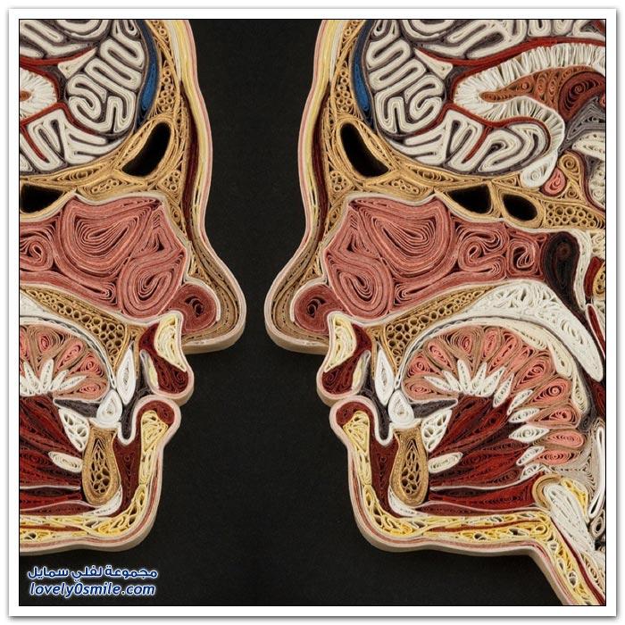 صور لأجزاء من جسم الإنسان مصنوعة من الورق