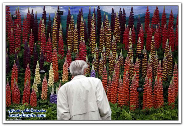 معرض تشيلسي للزهور