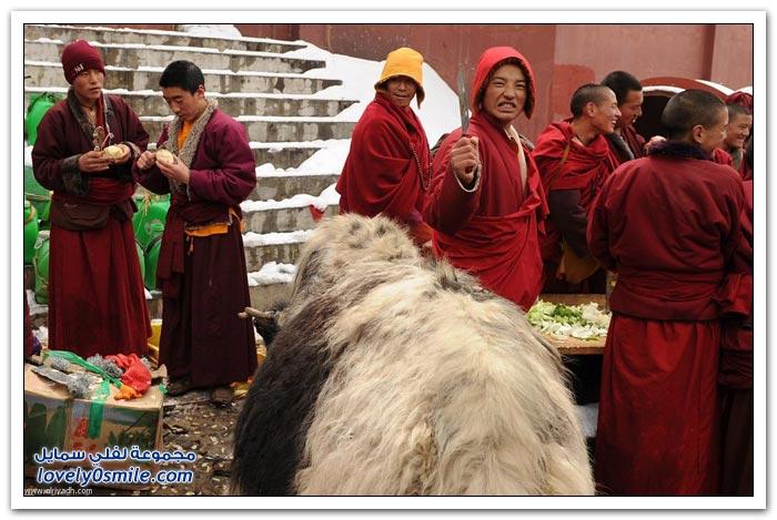 يوم في التبت