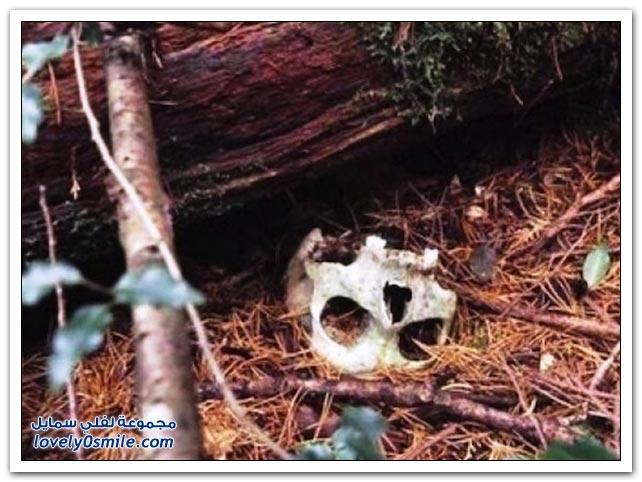 الغابة المسحورة ملجأ اليائسين للتخلص من حياتهم