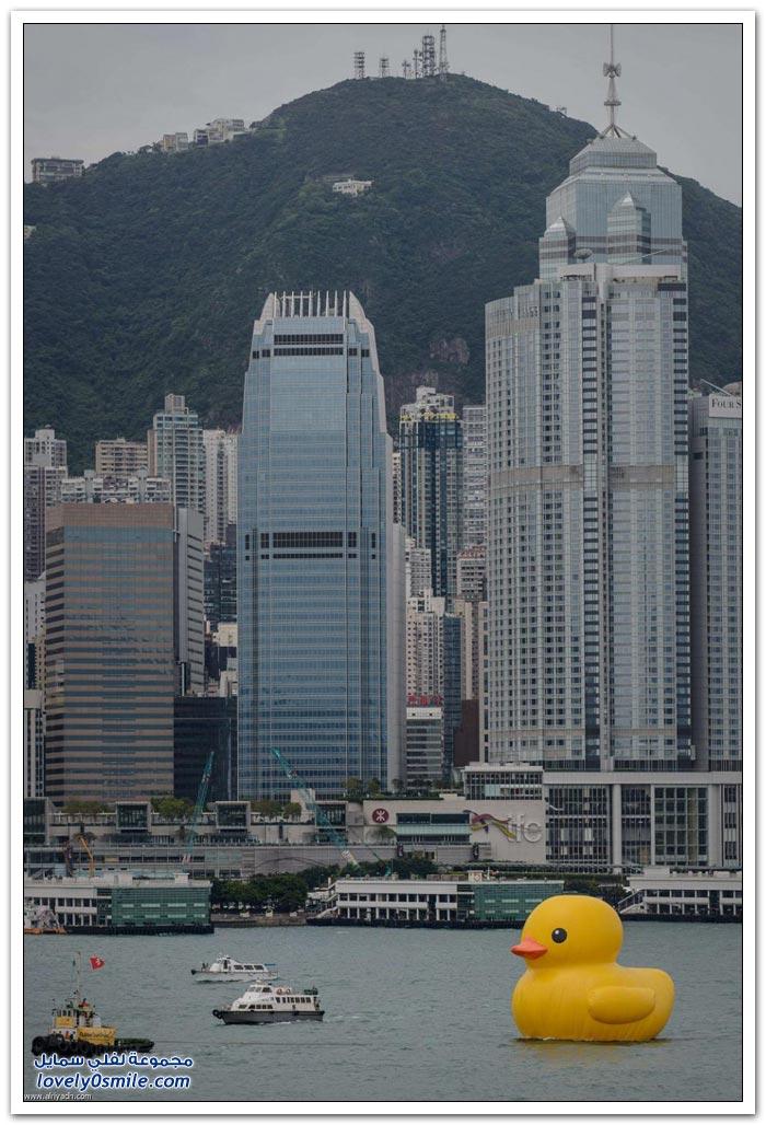 البطة العملاقة في هونغ كونغ