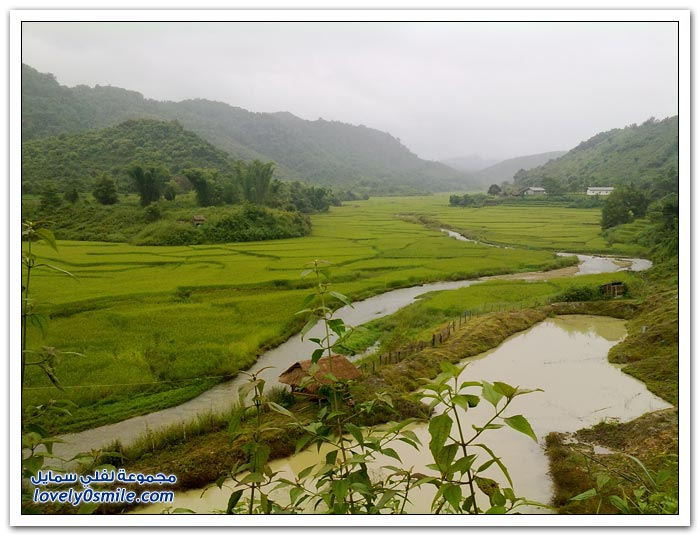 جبال كارست وحقول الأرز في كوك تام، فيتنام