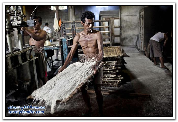 صناعة المكرونة في إندونيسيا