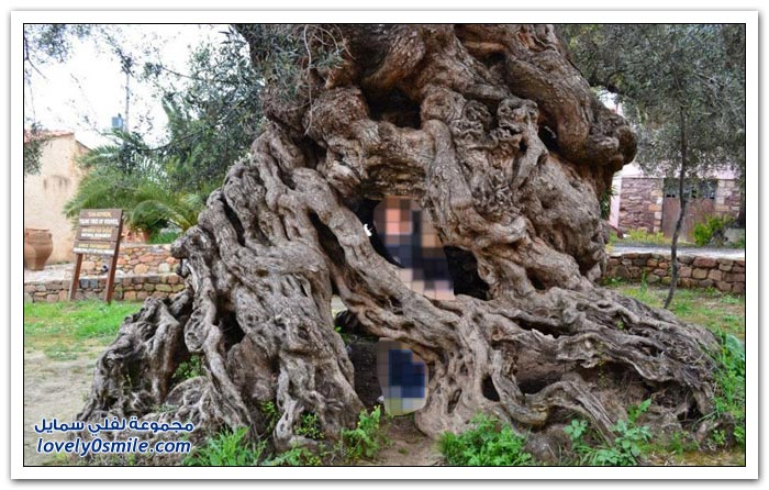 أغرب الأشجار في العالم