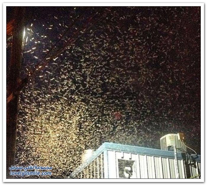 النمل الأبيض يغزو مدينة نيو أورلينز في أمريكا