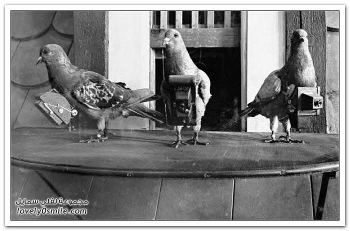 الحمام المتخصص بالتصوير في بدايات القرن العشرين