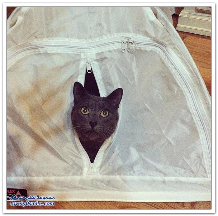 اختباء القطط