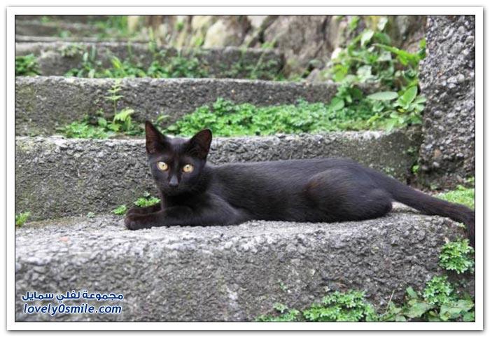 مدينة القطط Houtong في تايوان