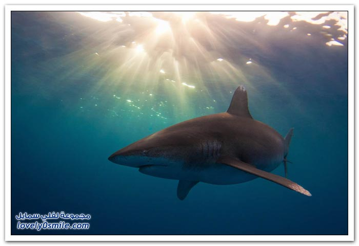 مسابقة التصوير الفوتوغرافي تحت الماء في جامعة ميامي 2013
