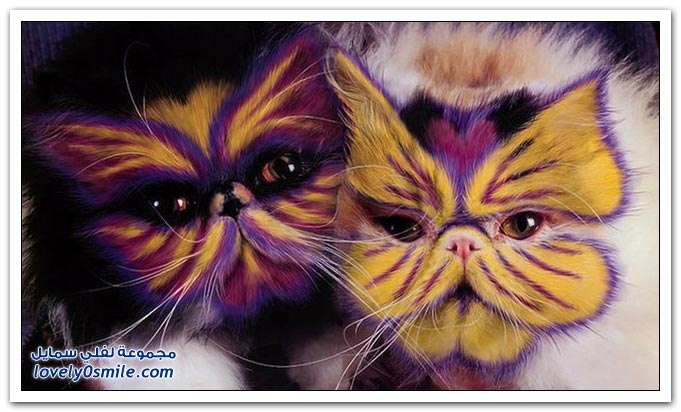 الرسم على القطط