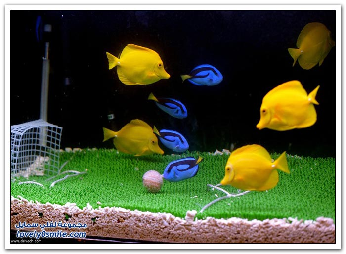مباراة الأسماك