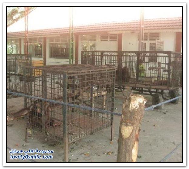 أسوأ حديقة حيوان في العالم