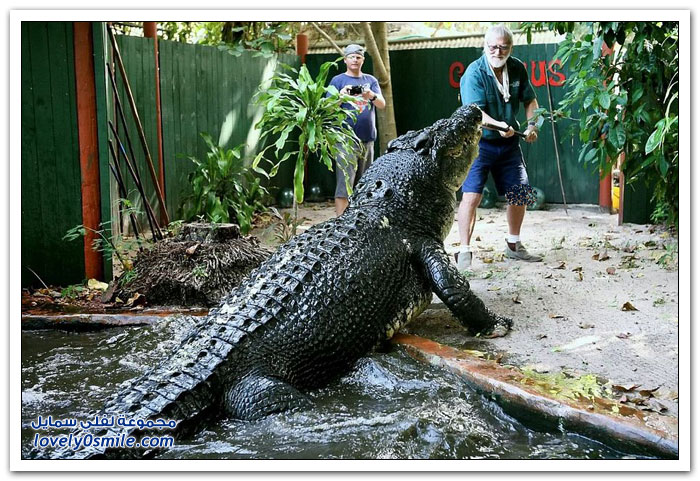 أكبر تمساح في العالم لعام 2013