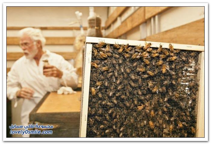 ثري دي من صناعة النحل