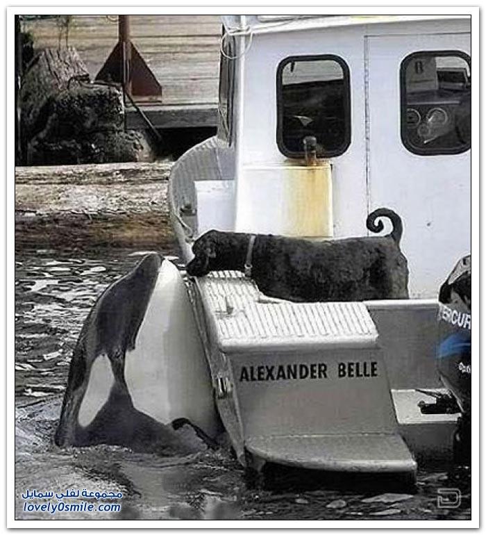 الحيوانات تساعد بعضها البعض