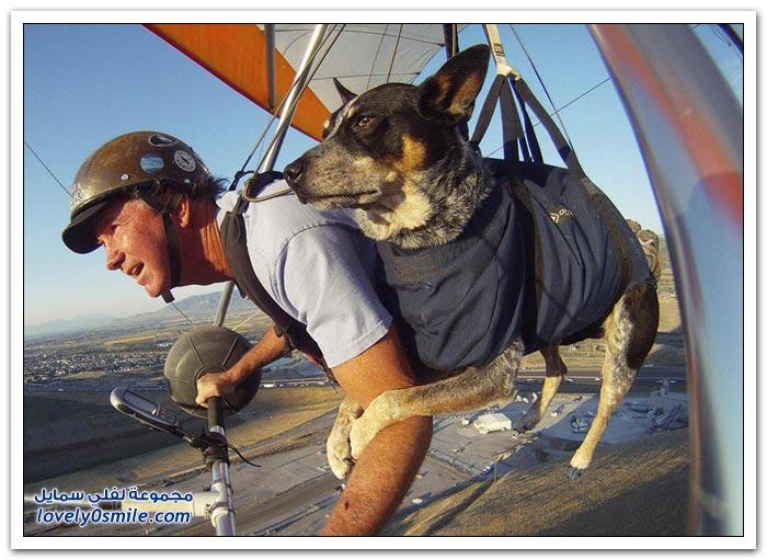 كلب يطير مع صديقه بطائرة شراعية