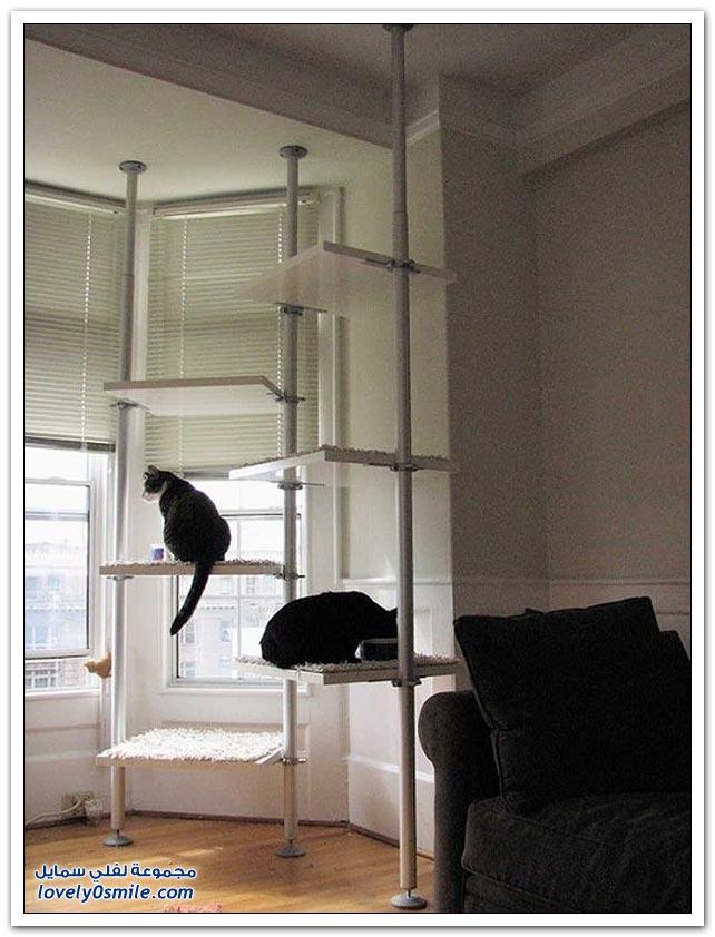 أماكن في المنزل مصممة للقطط