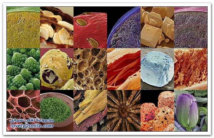 بعض الأغذية والفواكه تحت المجهر