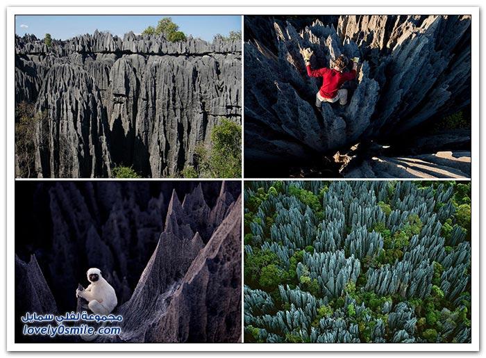 غابة الأحجار في مدغشقر