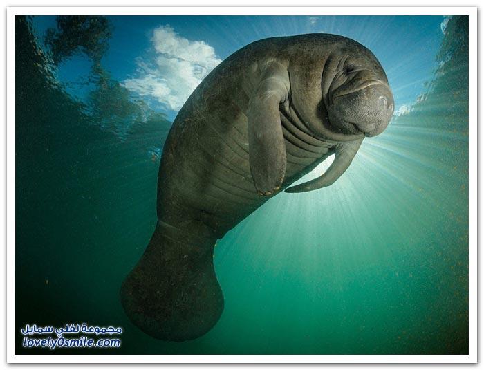 أفضل الصور من ناشيونال جيوغرافيك روسيا في تموز 2013