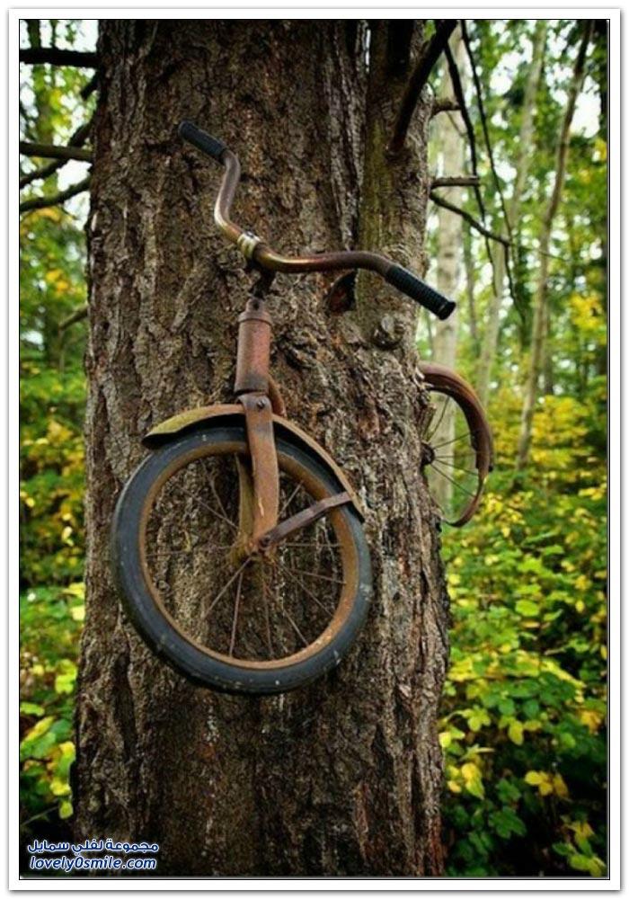 أشجار تأكل الأشياء مع مرور الوقت
